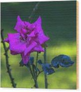 Rain Wet Rose 2 Wood Print