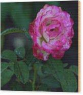 Rain Wet Rose Wood Print