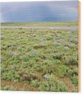 Rainbow And Lupine, Grand Teton Nm, Wyoming Wood Print