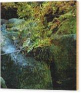 Rainbow Autumn Ferns At Pickle Creek 6303 H_3 Wood Print
