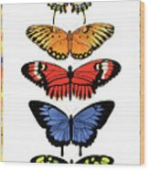 Rainbow Butterflies Wood Print