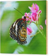 Rainbow Butterfly Wood Print