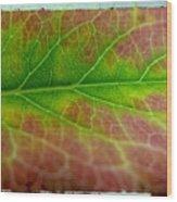 Rainbow Coleus 1 Wood Print