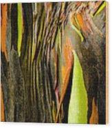 Rainbow Eucalyptus Bark Wood Print