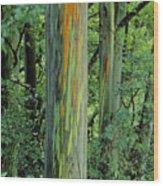 Rainbow Eucalyptus Wood Print
