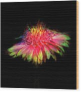 Rainbow Flower On Black Wood Print
