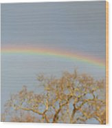 Rainbow Illumined Oak Tree Wood Print