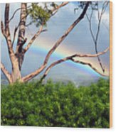 Rainbow In The Trees Wood Print
