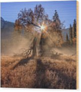 Rainbow In Yosemite Valley Ice Fog Wood Print