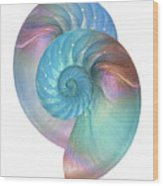 Rainbow Nautilus Pair On White Wood Print