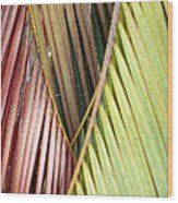 Rainbow Of Palms Gp Wood Print