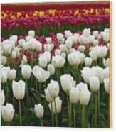 Rainbow Of Tulips Wood Print