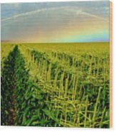 Rainbow Over The Cornfields Wood Print