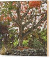 Rainbow Shower Tree Wood Print