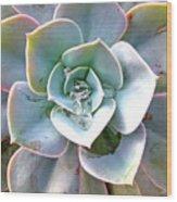 Rainbow Succulent - My Cup Runneth Over Wood Print