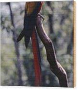 Rainbowparrot Wood Print