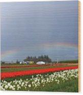 Rainbows At Tulip Festival Wood Print