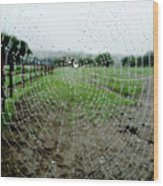 Raincatcher Web Wood Print