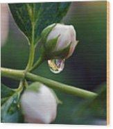 Raindrop Garden Wood Print