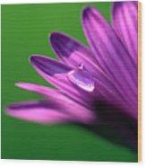 Raindrop On Purple Petal Wood Print