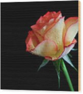 Raindrop Rose Wood Print by Tracy Hall