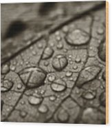 Raindrops #1 Wood Print