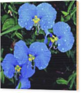 Raindrops In Blue Wood Print