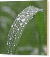 Raindrops On A Blade Of Grass Wood Print