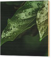 Raindrops On Avocado Leafs Wood Print