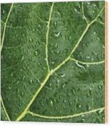 Raindrops On Fiddle Leaf Wood Print