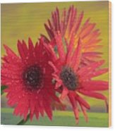 Raindrops On Gerbera Wood Print