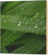 Raindrops On Green Leaves Wood Print