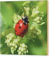 Raindrops On Ladybug Wood Print