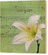 Raindrops On Lily Wood Print