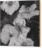 Raindrops On Petals Monochrome Wood Print