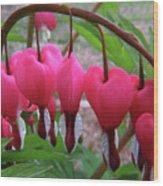 Raindrops On Pink Bleeding Hearts Wood Print