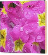 Raindrops On Pink Flowers 2 Wood Print by Carol Groenen