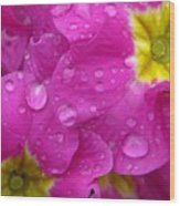 Raindrops On Pink Flowers Wood Print