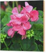 Raindrops On Pink Geranium Wood Print