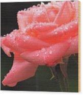 Raindrops On Roses... Wood Print