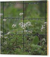 Raindrops On The Garden Fence Wood Print