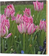 Raindrops On Tulips Wood Print