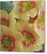 Raindrops On Yellow Flowers Wood Print
