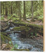 Rainforest At Bridal Veil Falls - British Columbia Wood Print