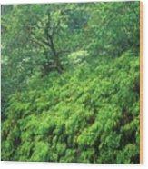 Rainforest Maui Wood Print