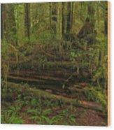 Rainforest Nurse Wood Print