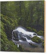 Rainforest Riverflow Scene Wood Print
