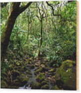 Rainforest Stream Wood Print
