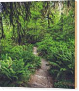 Rainforest Trail Wood Print