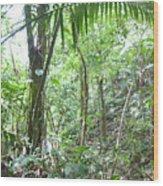 Rainforest Trees Wood Print
